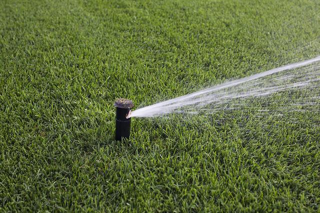 Greenhorizons ProXstablishment Watering